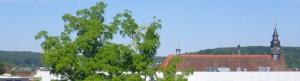 Stammtisch Forchheim @ Gasthaus Roter Ochs |  |  |